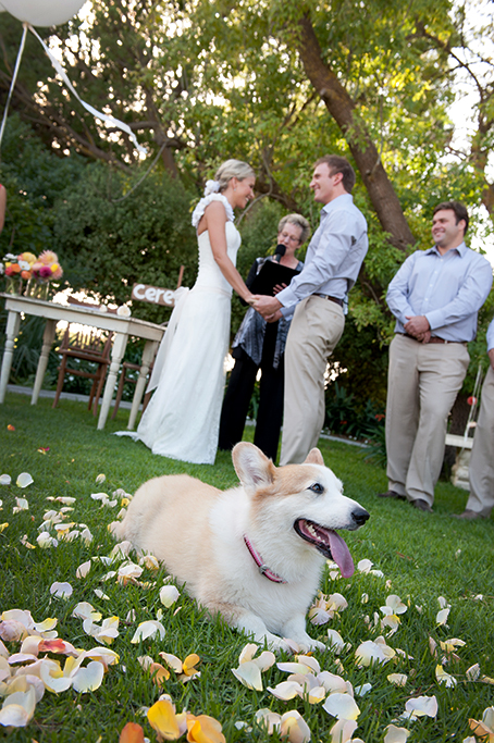 dog, cute, wedding, groom, bride, ceremony, South Australia, vows, celebrant, outback, rural, country, wood, colorful, flowers, rose petals, photographer, happy, photography
