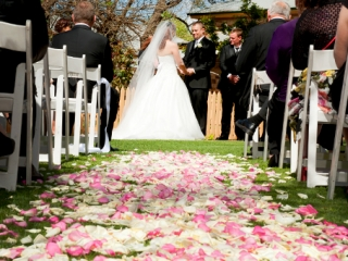 petals, gorgeous, colorful, beautiful, nature, outdoor, photography, wedding, ceremony, blue sky, roses, pink, white, green, grass, chairs, guests, Australia, family, friends, love, suit, black, photographer, tie, shirt, dress, veil, celebrant, groomsmen, Adelaide