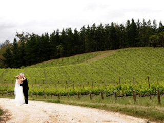Adelaide, hills, The Lane, Vineyard, beautiful, Australia, bride, groom, wine, trees, photography, greenery, nature, black, suit, white, shirt, dress, veil, hair, up-do, style, love, veil, wood